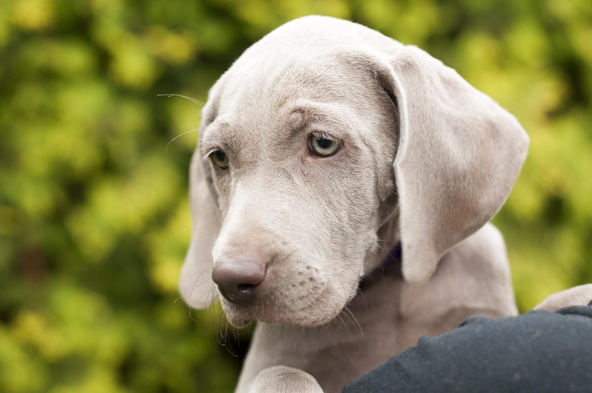 Auch Hundewelpen müssen regelmäßig entwurmt werden