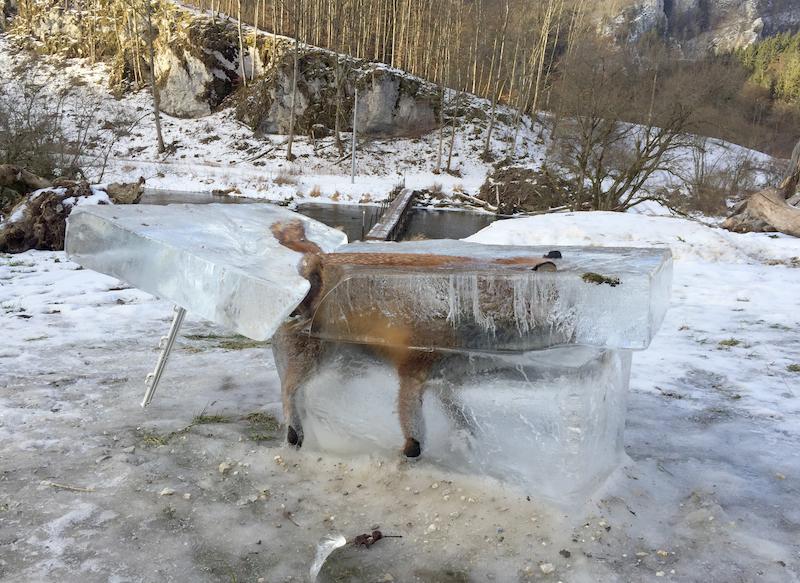 Fuchs in einem Eisblock