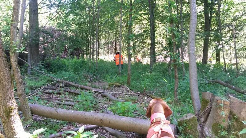 Wildunfall mit Reh NAchsuche mit dem Hund