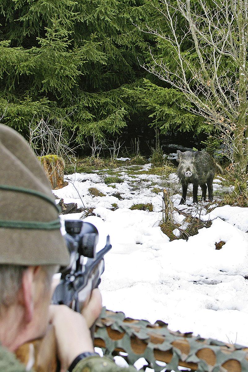 Jäger zielt auf WIldschwein im Schnee