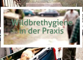 Wildbrethygiene in der Praxis
