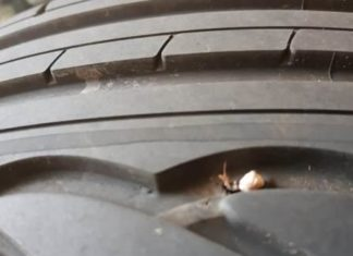 Zahn Reifen