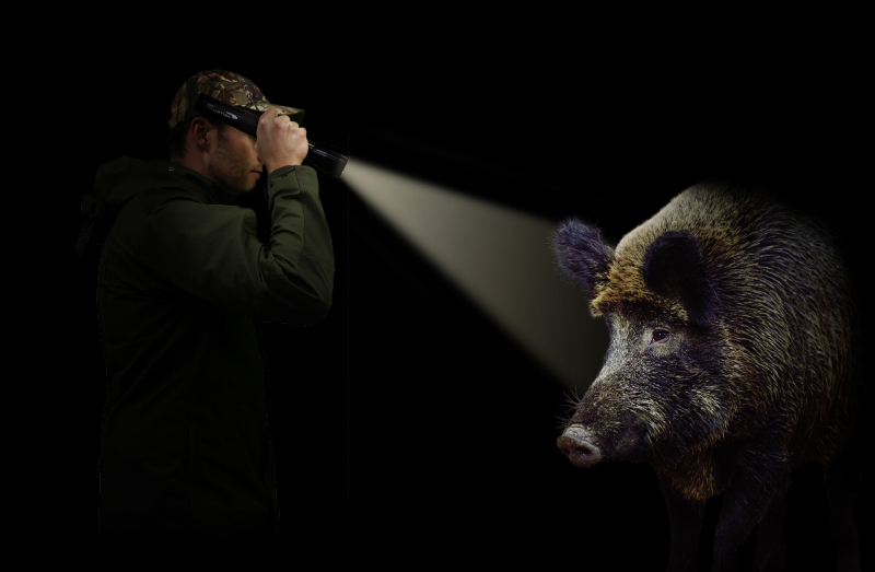 In vielen Bundesländern dürfen WIldschweine bei der Jagd in der Nacht mit einer Taschenlampe angestrahlt werden