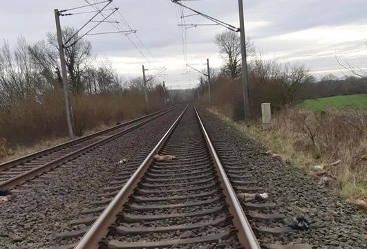 Mehrere tote Tier auf Bahngleisen