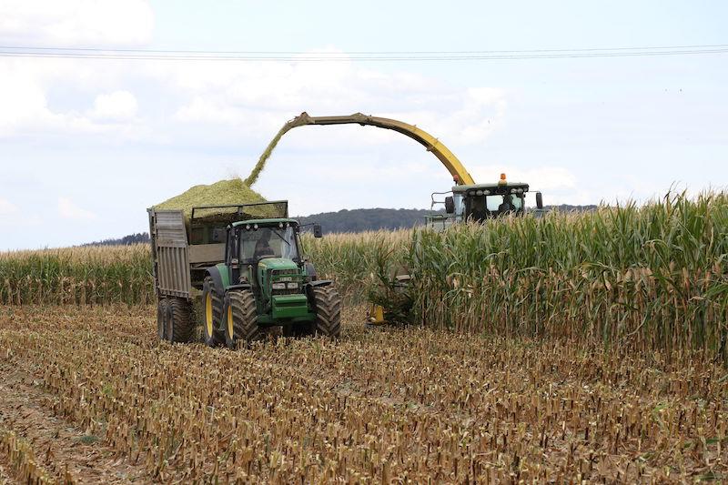 Traktor beim Maisernten auf dem Feld