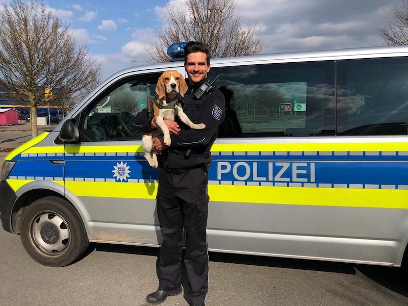 Ein Beagle auf dem Arm eines Polizisten vor einem Polizeiauto