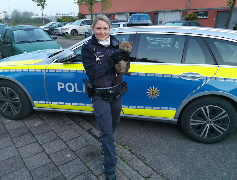 Fuchswelpe auf dem Arm einer Polizistin