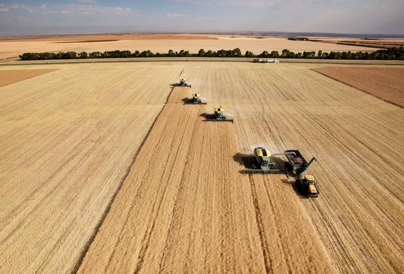 Mehrere Mähdrescher ernten Getreide auf einem großen Feld