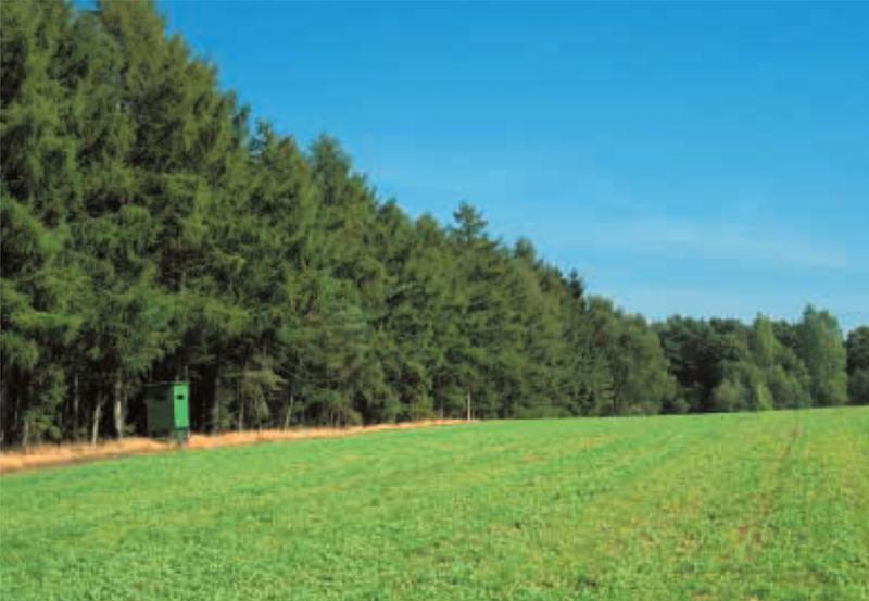 Wald/Feldkante