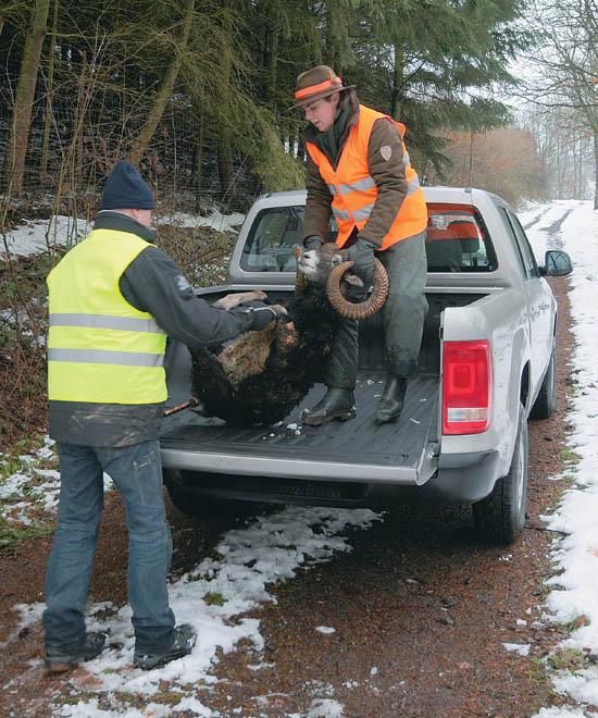 vw amarok – arbeitstier mit kleinem herz - deutsche jagdzeitung